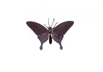medium_papillon.JPG